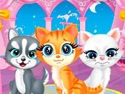 Кошки в салоне красоты